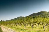Uprawy drzew owocowych — Zdjęcie stockowe