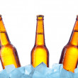 Bottle beer in ice — Stock Photo #8867668
