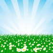 Vector grass and sky vector chamomile flower field and sky — Stock Vector