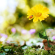 Flower on nature background — Stock Photo