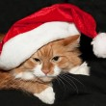 Noel Noel Baba kedi — Stok fotoğraf