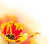 Obramowanie tulipan piękne — Zdjęcie stockowe