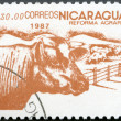 NICARAGUA - 1987: shows image of agrarian reform, Cattle - Stock Photo