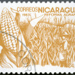 NICARAGUA - 1983: shows image of agrarian reform, Corn — Photo