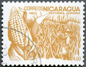 NICARAGUA - 1983: shows image of agrarian reform, Corn — Stock Photo