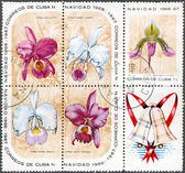CUBA - 1966: shows christmas block with orchids — Stock Photo