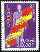 FRANCE - CIRCA 2001: A stamp printed in France shows DNA — Foto Stock