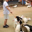 Little boy feed group rabbits — Stock Photo
