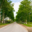 Avenue in park — Stock Photo