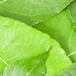 Fresh green leaves background — Photo