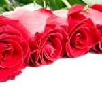 Beautiful Roses Border — Stock Photo