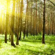 Green forest — Stock Photo #9966284