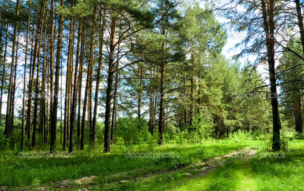 Green forest  Stock Photo #9966299