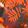Stock Photo: Autumn leaves, very shallow focus