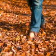 Walking through the autumn leaves — Stock Photo