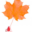 Stock Photo: Autumn colored leaf and hand