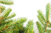 Close up view of the Christmas tree — Stock Photo