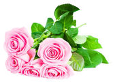 Bouquet of beautiful pink roses — Stockfoto