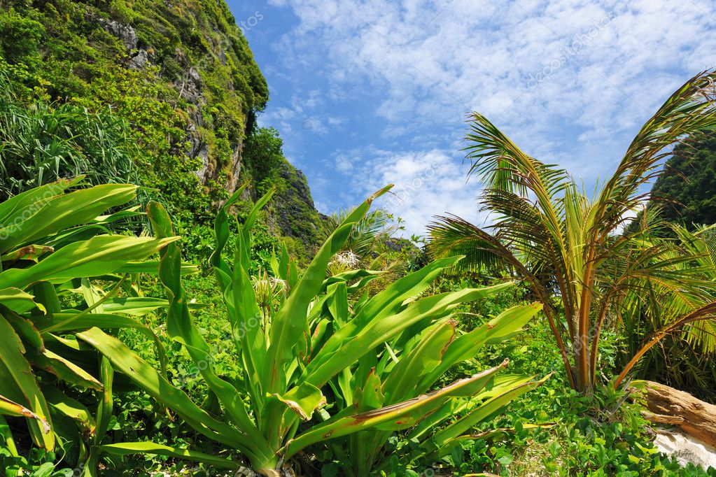 Beautiful tropical nature at  Phi Phi Ley island, the exact place where The Beach movie was filmed — Stock Photo #9411362
