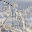 Plant in snow — Stock Photo #8039390