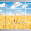Barley field cut into many photos — Stock Photo