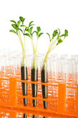 Lab experiment with green leaves — Stock Photo