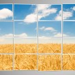 Barley field cut into many photos — Stock Photo #8111037