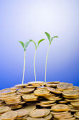 Financial concept with seedlings and coins — Stock Photo
