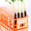 Lab experiment with green seedlings - Foto Stock