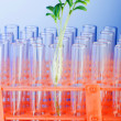Experiment with green seedling in lab - Stock Photo