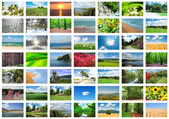 Collage de muchas fotos de la naturaleza — Foto de Stock