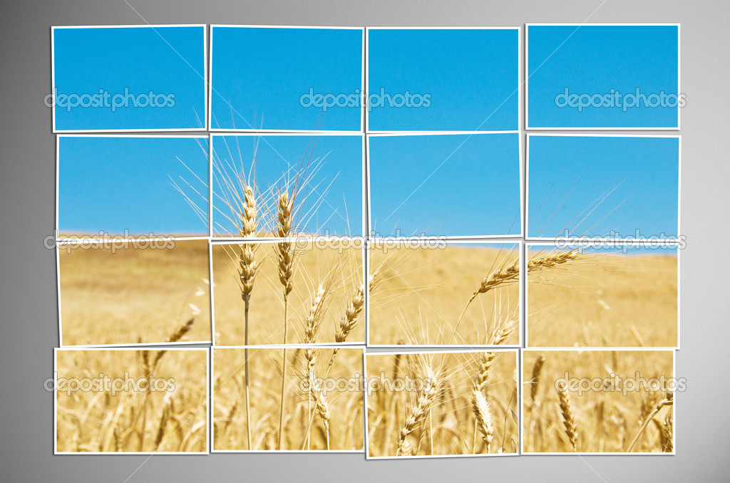 Barley field cut into many photos — Stock Photo #8876473