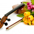 Royalty-Free Stock Photo: Violin and tulip flowers on white