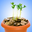 Green seedling growing from the pile of coins — Stockfoto #9098146