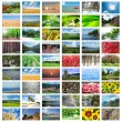 Collage of many nature photos — Stock Photo #9100959