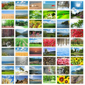 Collage of many nature photos — Stock Photo