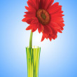 Gerbera flower against gradient background — Stock Photo #9175134