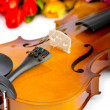 Violin and tulip flowers on white — Stock Photo
