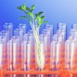 Experiment with green seedling in lab — Stock Photo