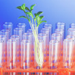 Experiment with green seedling in lab - Foto de Stock