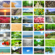 Collage of many nature photos - Zdjęcie stockowe