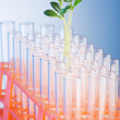 Stock Photo: Lab tests with green seedlings