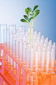 Pruebas de laboratorio con plántulas verdes — Foto de Stock