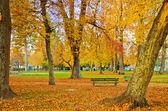 Otoño en el parque de la ciudad — Foto de Stock