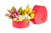 Giftbox and tulips isolated on white — Stock Photo