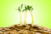 Money growth concept with coins and seedling — Stock Photo