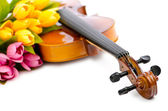 Violin and tulip flowers on white — Stockfoto