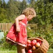 Little girl collects the apples scattered on a grass in a basket - Lizenzfreies Foto