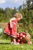 Kleines mädchen sammelt die äpfel auf dem gras verstreut in einem korb — Stockfoto