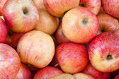 Ripe fresh apples — Stock Photo